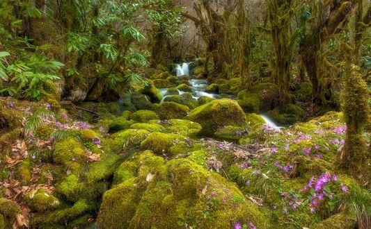 Обои Сиреневые цветы на поросшей мхом земле перед небольшим водопадом, фотограф Romani Tolordava