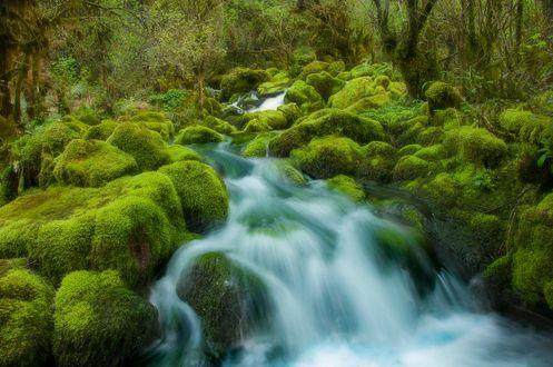 Обои Весенний разлив реки в лесу, фотограф Romani Tolordava
