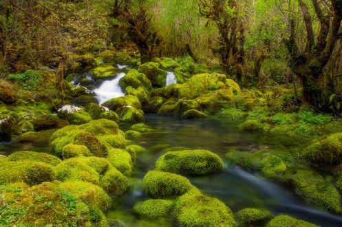 Обои Река в лесу, фотограф Romani Tolordava