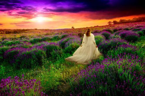 Обои Девушка в белом платье на лавандовом поле на фоне заката