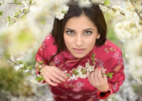Обои Красивая девушка смотрит на нас на фоне цветущих веток. Фотограф Таня Маркова