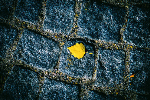 Обои Желтый листок лежит на каменных плитках