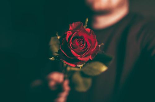 Обои Мужчина держит розу в руке