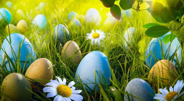 Обои Раскрашенные пасхальные яйца в траве среди цветов