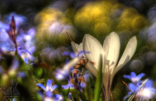 Обои Весенние цветы на размытом фоне