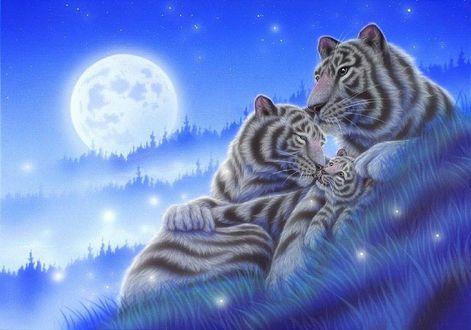 Обои Семейство тигров отдыхающих на траве, на фоне луны и звезд в ночном небе. Художник Kentaro Nishino