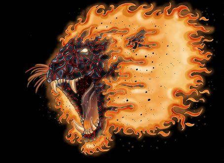 Обои Огненный оскал свирепого льва