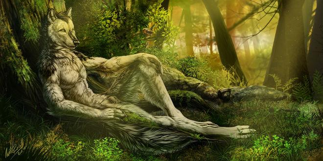 Обои Волк - оборотень отдыхает, облокотившись о дерево в лесу