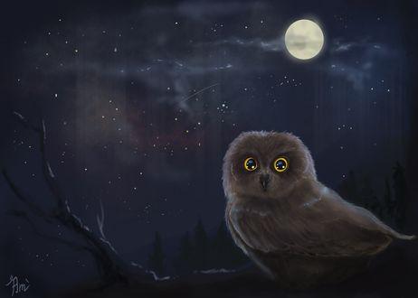 Обои Сова на фоне ночного неба с луной, by AmeDvleec