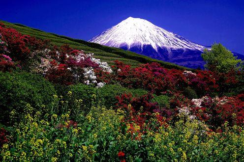 Обои Разноцветная цветочная долина на фоне горы и синего неба