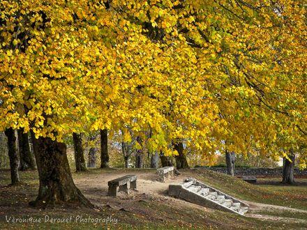 Обои Деревья с осенней желтой листвой на алее, by Veronique Derouet