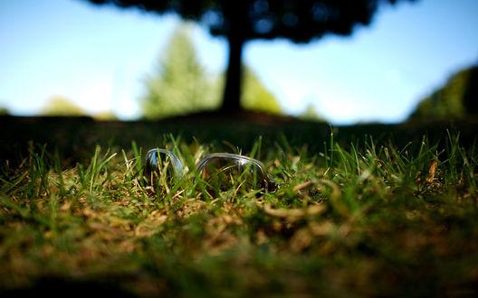 Обои Солнцезащитные очки в траве