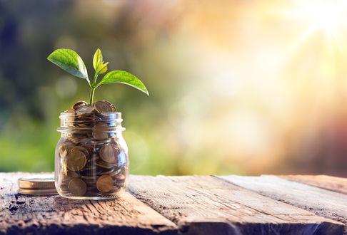 Обои Из стеклянной банки с монетами растет росток
