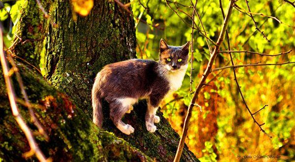 Обои Кот стоит, насторожившись, на дереве на фоне яркой листвы, подсвеченной солнцем