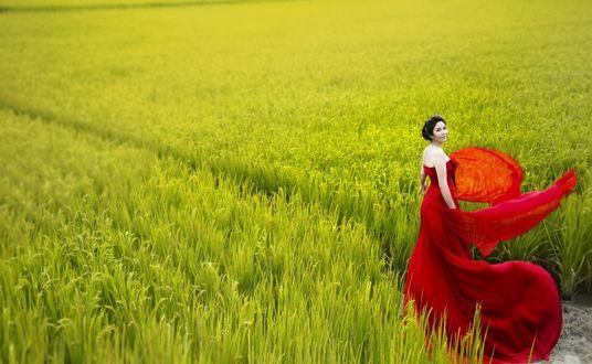 Обои Девушка в красном на фоне зеленой травы