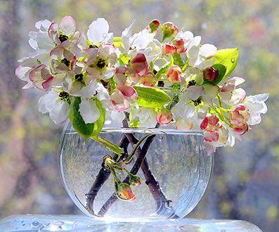 Обои Весенние веточки с цветами в вазе с водой