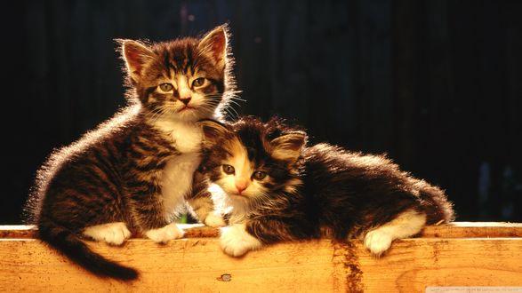 Обои Два котенка на ярком свете с размытым темным фоном