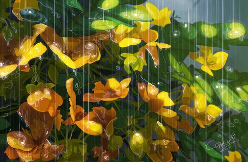 Обои Желтые цветы под дождем, by Clo sz
