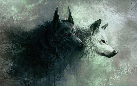 Обои Черный и белый волки со шрамами и красными глазами