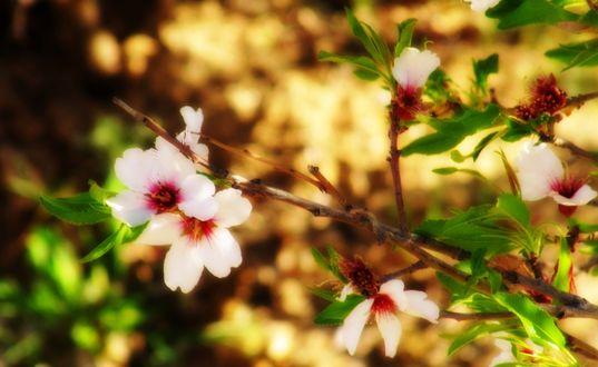 Обои Белые цвета на фоне листвы освещенной солнцем