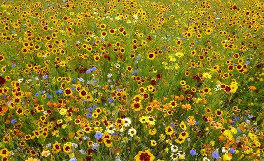 Обои Разноцветные яркие цветы на лужайке