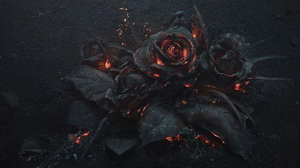 Обои Тлеющие почерневшие розы с черными листьями и язычками пламени, засыпанные черным пеплом на темном фоне