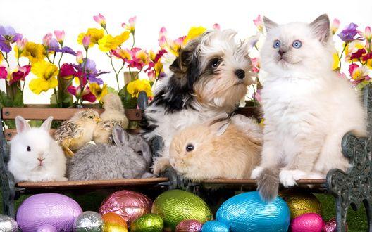 Обои Котенок, щенок, цыплята и крольчата сидят на полочках среди пасхальных яиц и цветов