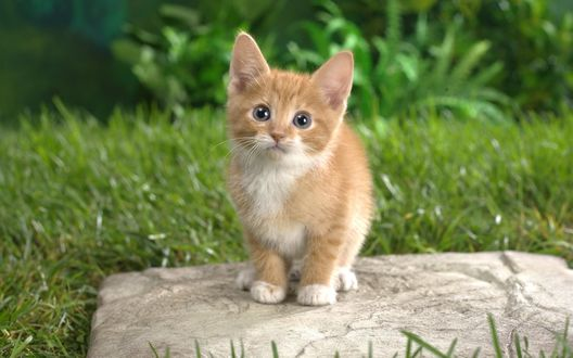 Обои Рыжий котенок сидит на камне среди травы и удивленно смотрит