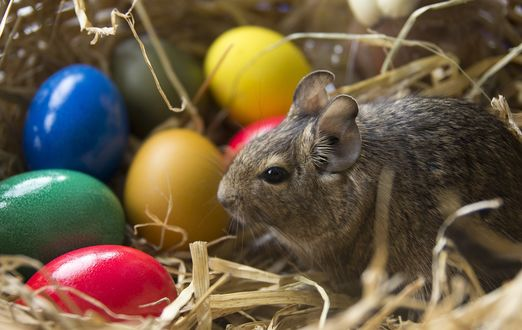 Обои Серый кролик сидит рядом с раскрашенными пасхальными яйцами в траве