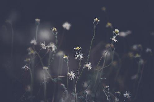 Обои Мелкие цветы на темном фоне