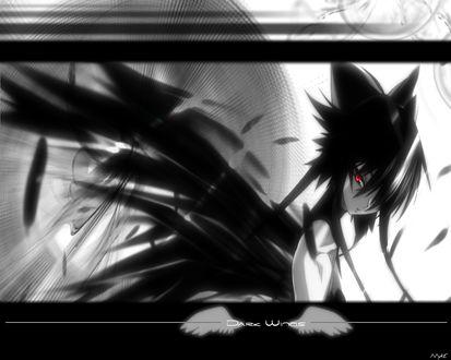 Обои Мальчик-ворон аниме с красными глазами, (dark wings)
