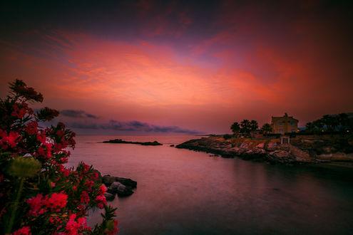 Красочный закат на побережье, на переднем плане розовые цветы, фотограф Руслан Болгов