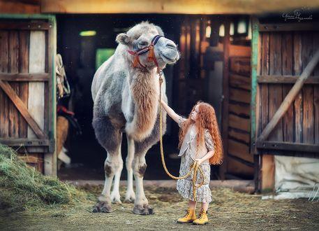 Обои Девочка стоит рядом с верблюдом, фотограф Ирина Недялкова