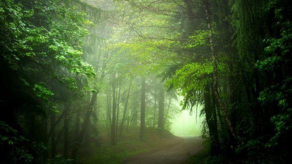 Обои Дорога в смешанном лесу