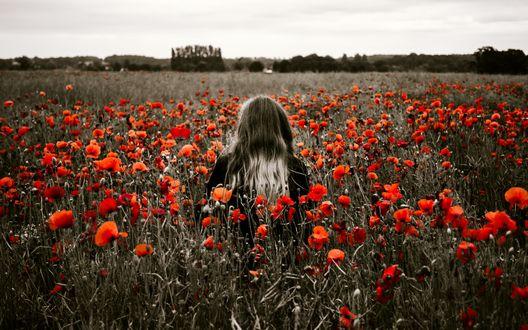 Обои Светловолосая девушка среди красных маков на размытом черно-белом поле