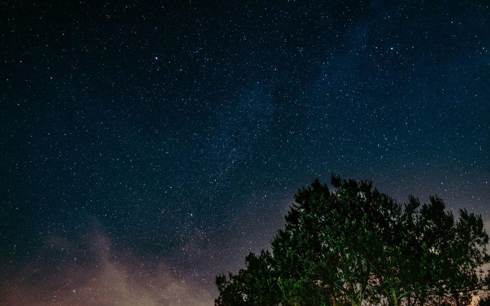 Обои для рабочего стола Крона дерева на фоне звездного неба