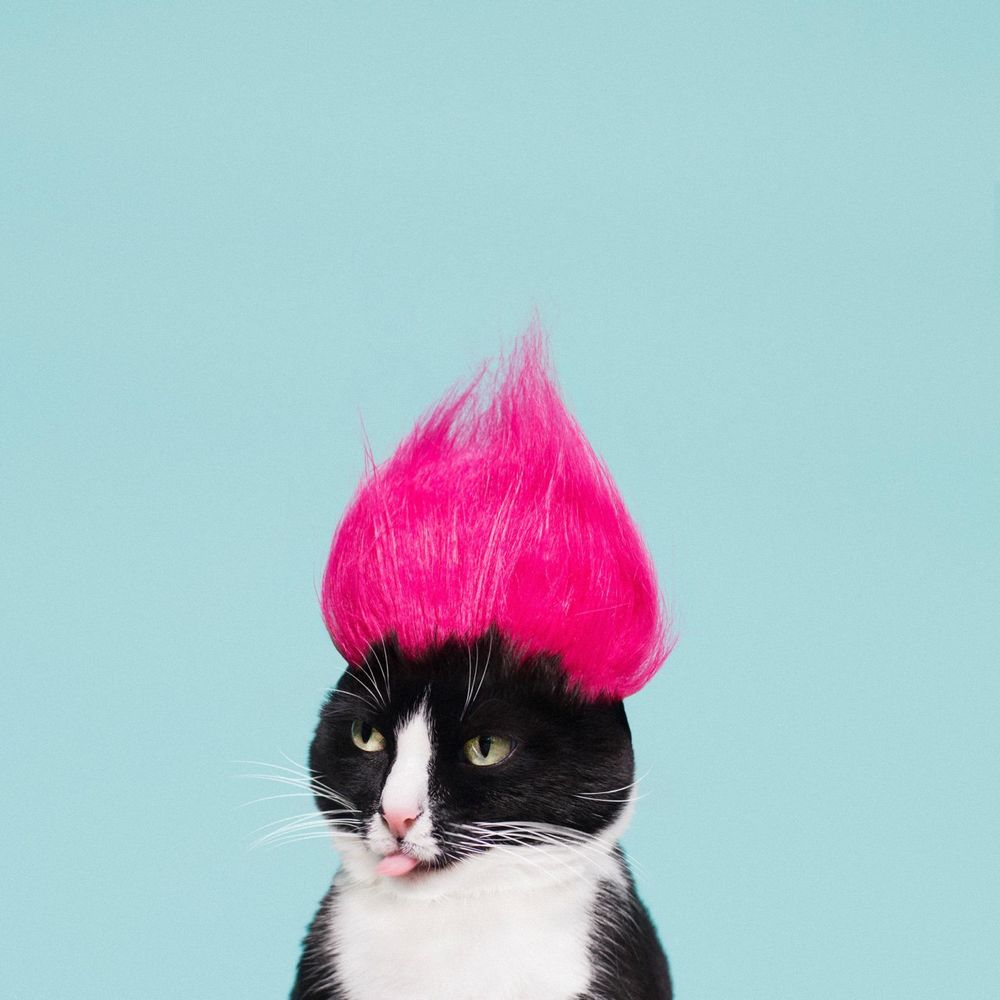 Обои для рабочего стола Черно-белый кот с розовым эрокезом на голове показывает язык, by princesscheeto