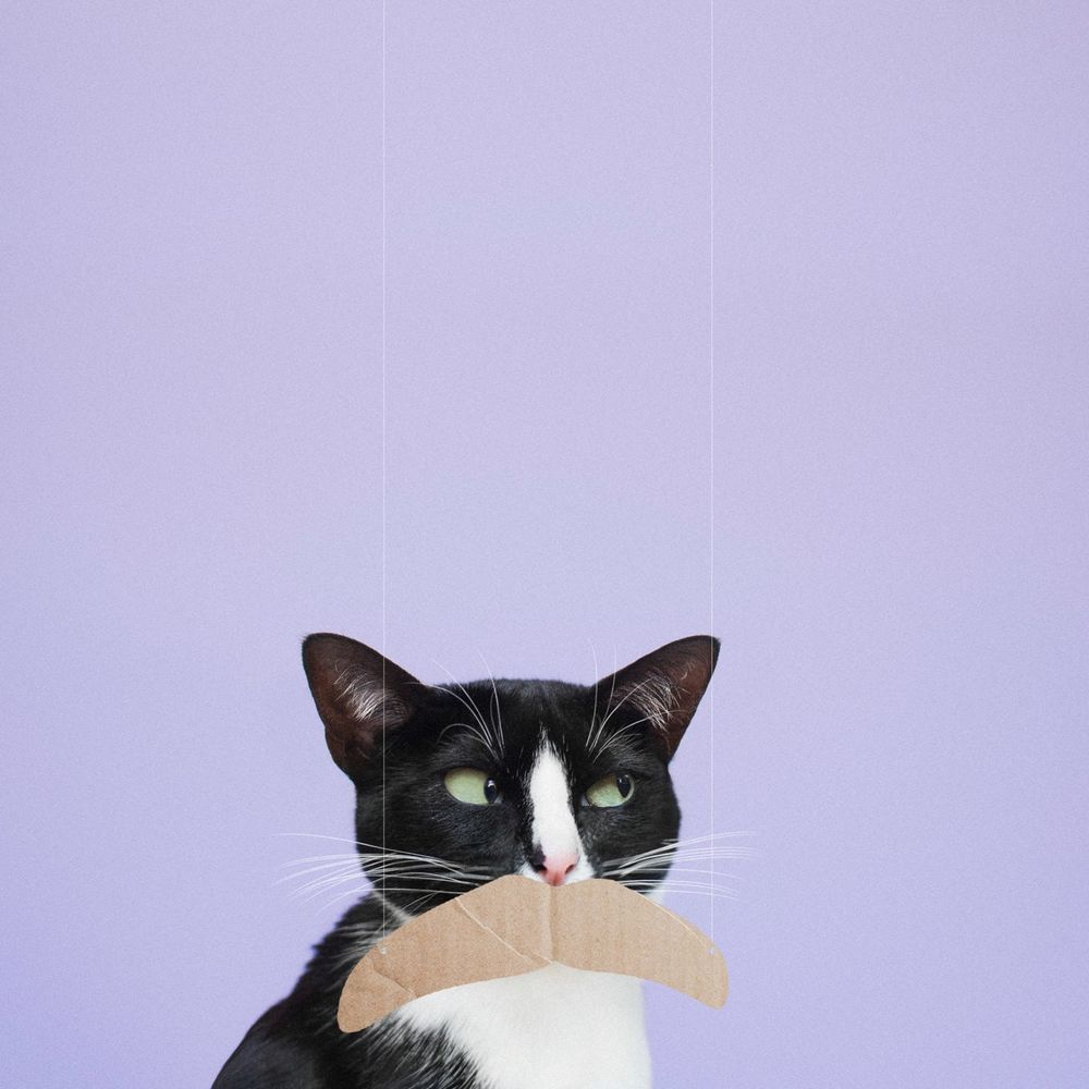 Обои для рабочего стола Черно-белый кот с картонкой вместо усов, by princesscheeto