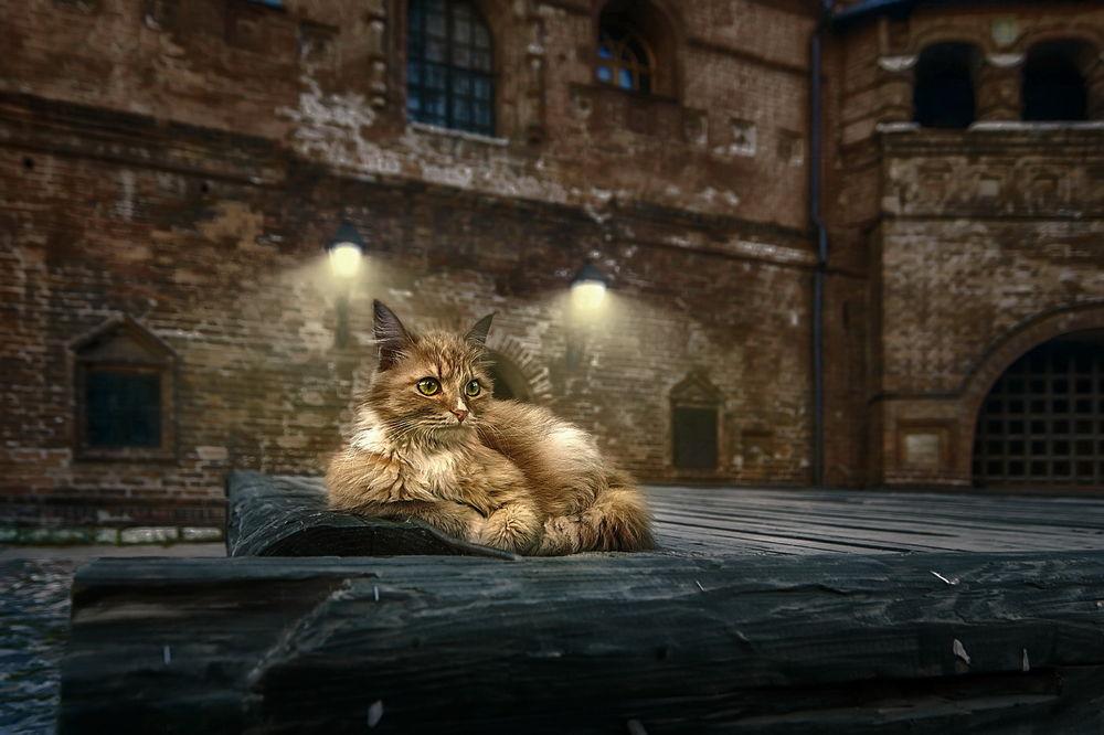 Обои для рабочего стола Кошка - хозяйка Крутицкого подворья, by GaL-Lina