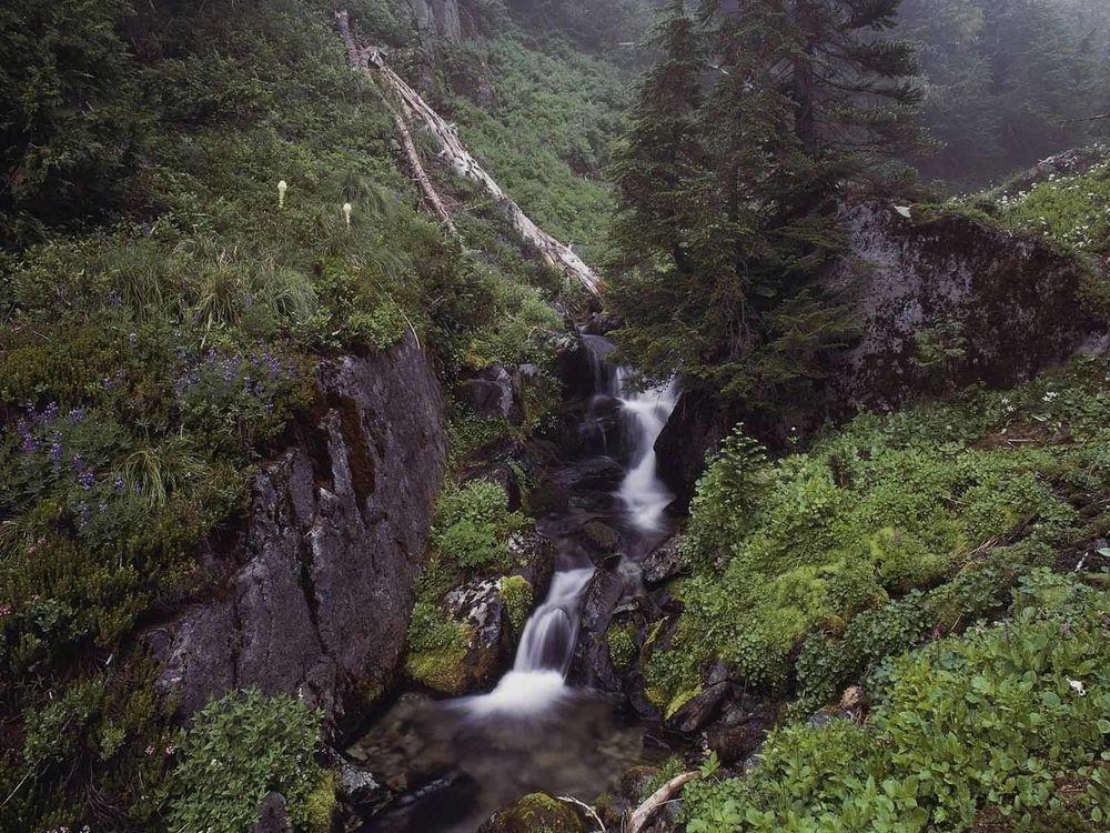 Обои для рабочего стола Горная река с порогами в ущелье, поросшем лесом