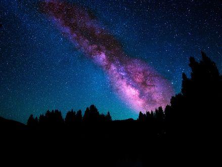 Обои Млечный Путь в ночном небе над вершинами деревьев