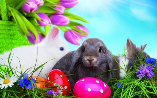 Обои Кролики рядом с пасхальными яйцами и букетом лиловых тюльпанов