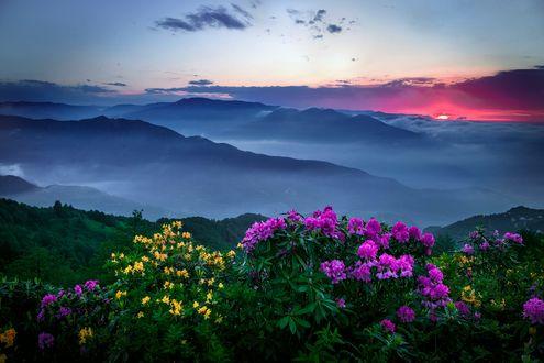 Обои Кусты цветов на переднем плане перед горами в туманной дымке, фотограф Turan Reis