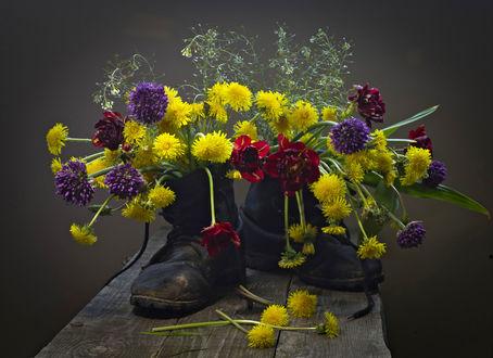 Обои Тюльпаны, одуванчики и фиолетовые цветы в старых ботинках, фотограф Оксана Евкодимова