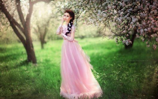 Обои Девушка в длинном, розовом платье стоит у цветущего дерева в саду