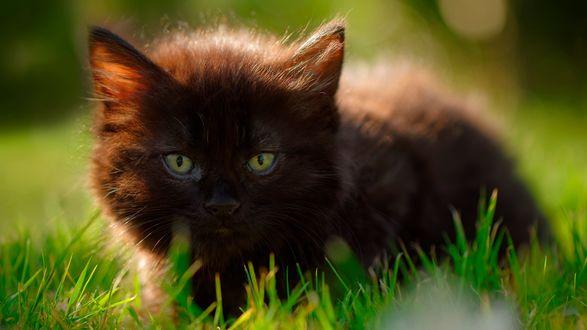 Обои Черный кот сидит в траве