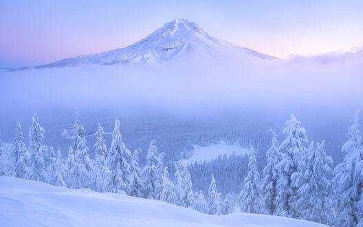 Обои Зимний вид на вулкан Маунт-Худ / Mount Hood в тумане с горы Том Дик и Гарри / Tom Dick and Harry на фоне окутанных снегом хвойных лесов в штате Орегон, США / Oregon, USA, фотограф Justin Poe