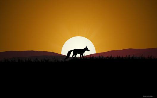 Обои Лиса на фоне заходящего солнца