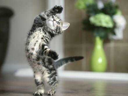 Обои Серый полосатый котенок тянет вверх лапку на фоне букета цветов в вазе