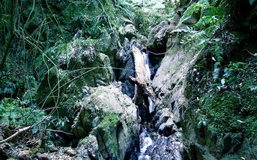 Обои Тонкая струйка водопада струится по склону среди зарослей и поваленных веток и крупных валунов и земляных уступов, на одном из выступов притаился серый кот